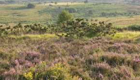 Michael taylor pic 1 tag Ashdown Forest